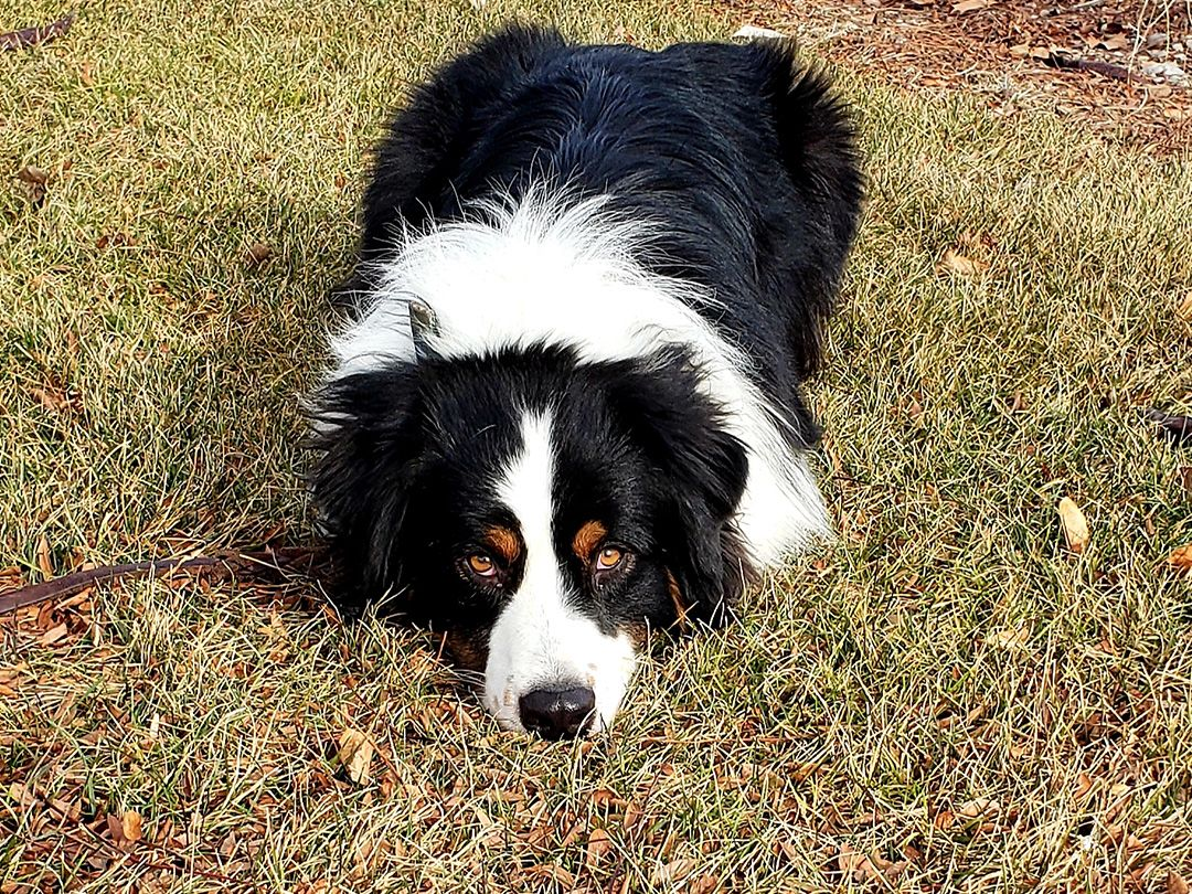 Meridian Dog Training | Dog 2