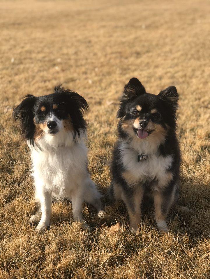 Meridian Dog Training | Dog 4
