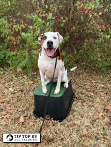 okc-dog-training-tip top